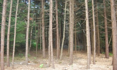 Careful select cutting improves the look and health of the forest land.